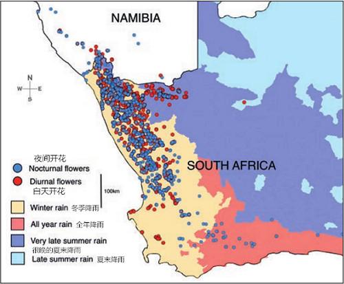 图一: Conophytum物种及子物种中昼开和夜开花在非洲西南部的分布。由于南非的季节性降雨特点,该物种的分布的临界值被强调了出来。