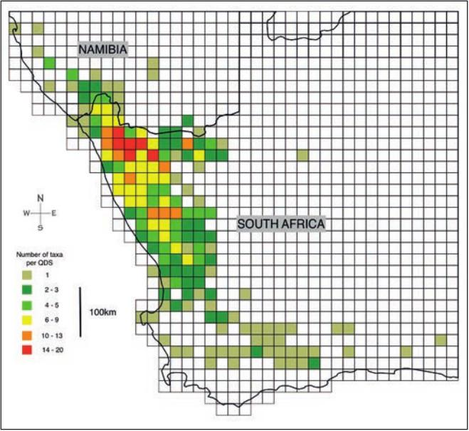 图二:Conophytum类属(物种及子物种)在非洲西南部每QDS的分布。这张地图由Conobase绘制,这是一个包含有超过3000个来自于该物种位置记录的数据库(2016年Young & Desmet最新数据)。