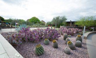 环球寻肉之旅——菲尼克斯沙漠植物园