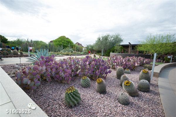菲尼克斯沙漠植物园-1