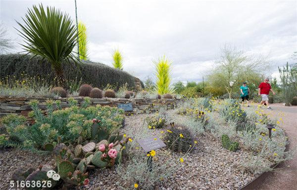 菲尼克斯沙漠植物园-15