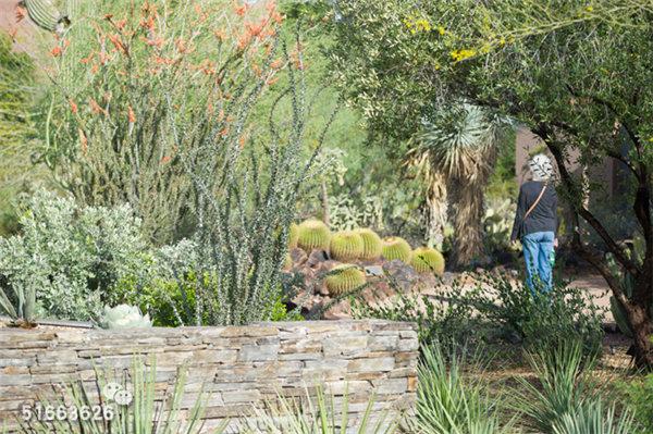 菲尼克斯沙漠植物园-16