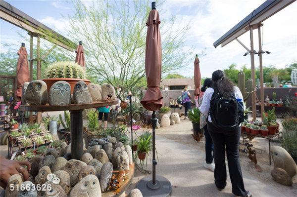 菲尼克斯沙漠植物园-21