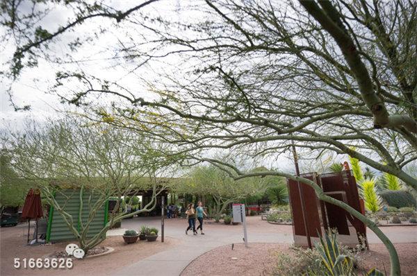 菲尼克斯沙漠植物园-25
