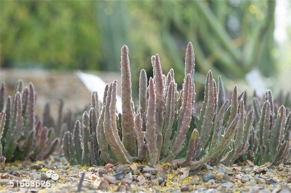 菲尼克斯沙漠植物园-27