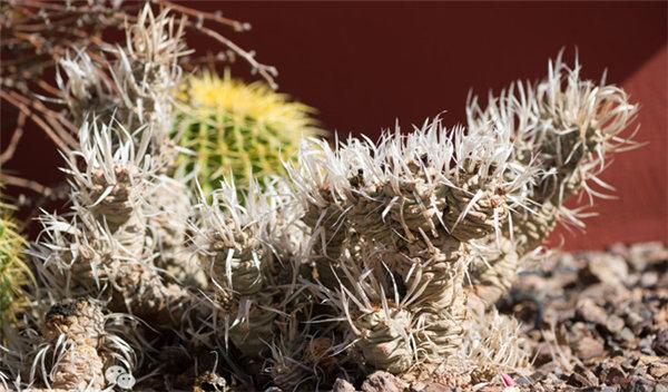 菲尼克斯沙漠植物园-28