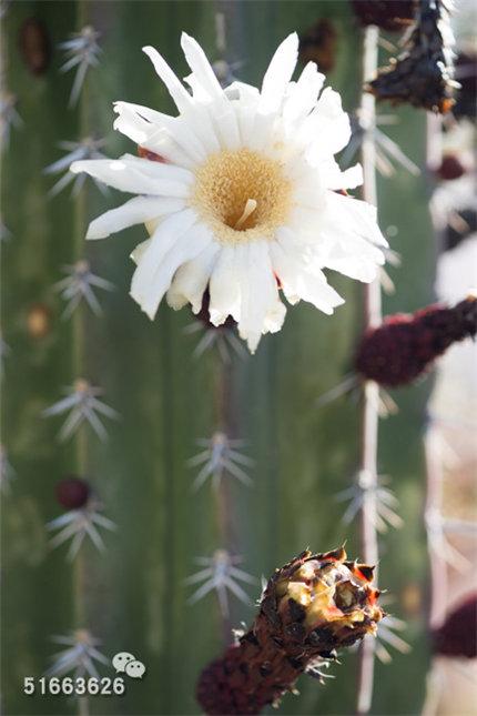 菲尼克斯沙漠植物园-30