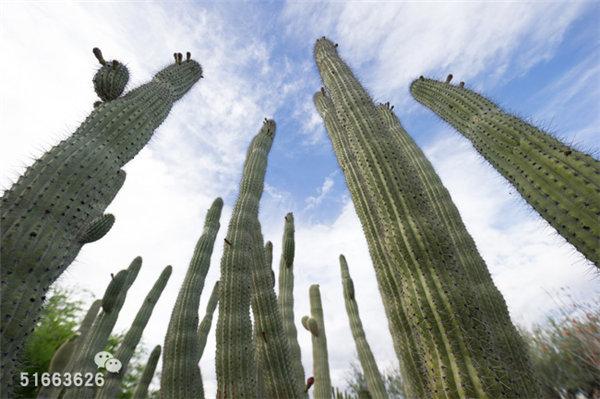菲尼克斯沙漠植物园-31