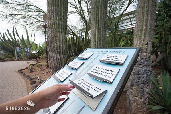 菲尼克斯沙漠植物园-33