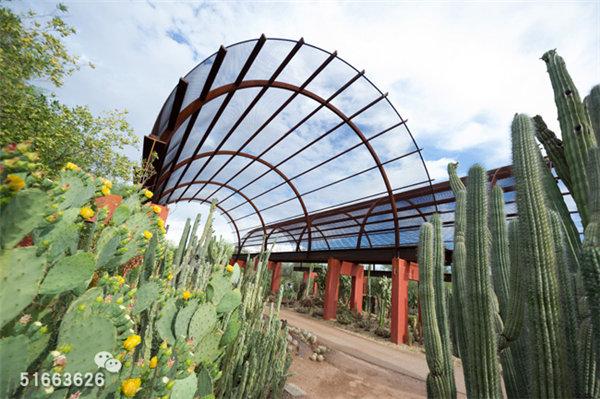 菲尼克斯沙漠植物园-35