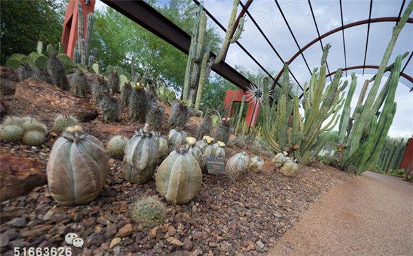 菲尼克斯沙漠植物园-38