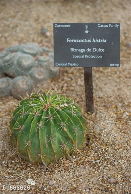 菲尼克斯沙漠植物园-40