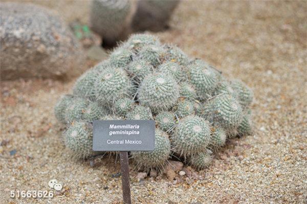 菲尼克斯沙漠植物园-45