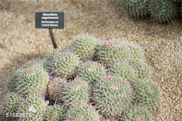 菲尼克斯沙漠植物园-46