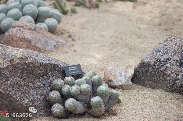 菲尼克斯沙漠植物园-47