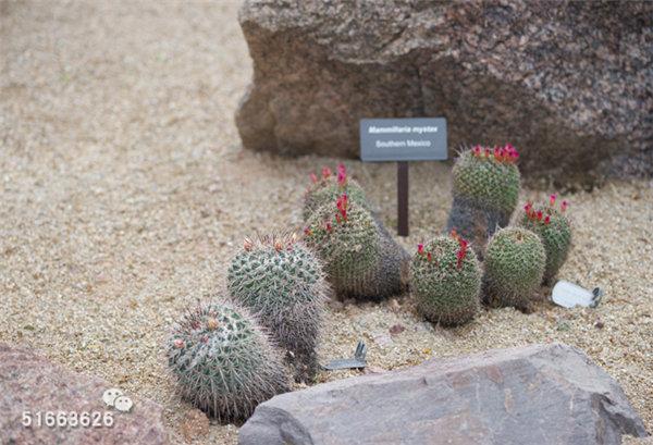 菲尼克斯沙漠植物园-48