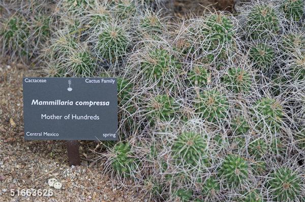 菲尼克斯沙漠植物园-50