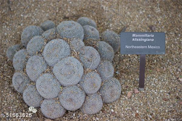 菲尼克斯沙漠植物园-51