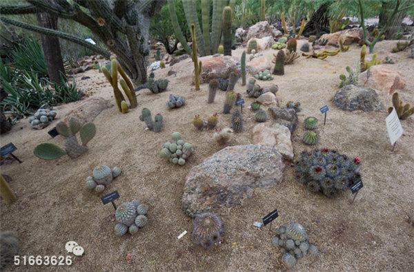 菲尼克斯沙漠植物园-59