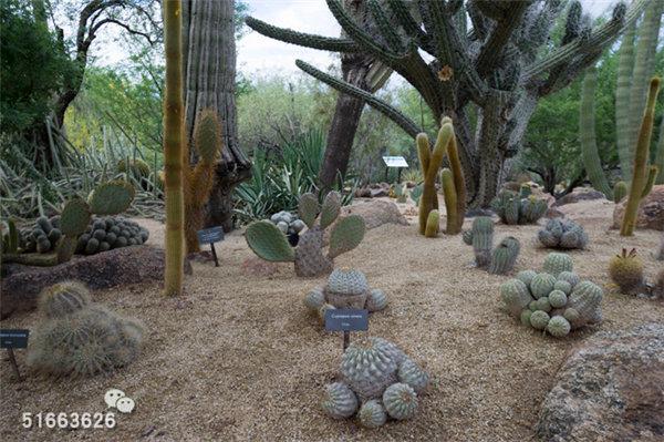 菲尼克斯沙漠植物园-60
