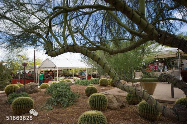菲尼克斯沙漠植物园-62