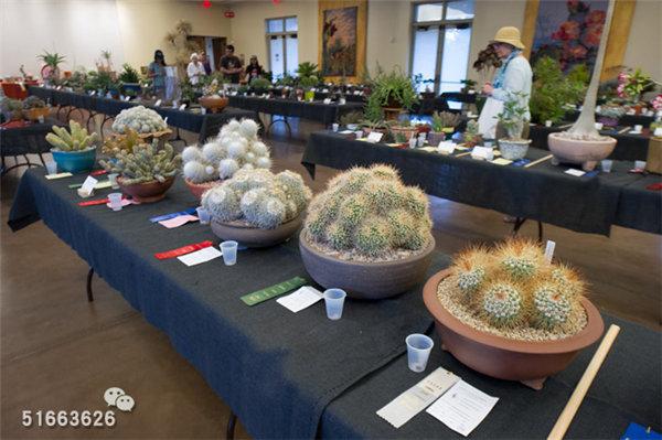 菲尼克斯沙漠植物园-72