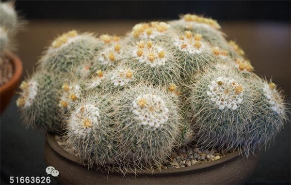 菲尼克斯沙漠植物园-76