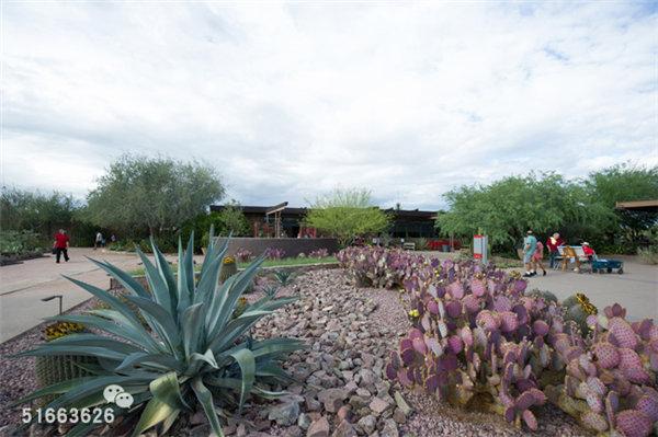 菲尼克斯沙漠植物园-8