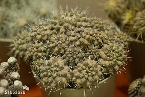 菲尼克斯沙漠植物园-86