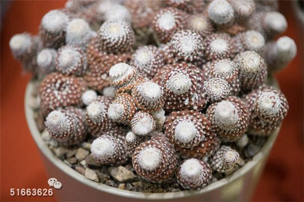 菲尼克斯沙漠植物园-87