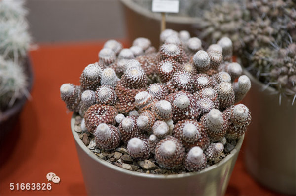 菲尼克斯沙漠植物园-88