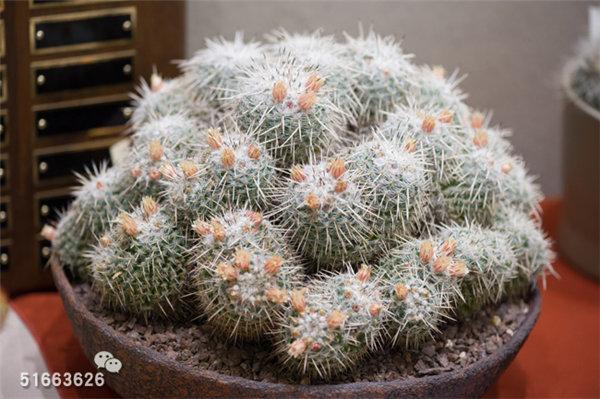 菲尼克斯沙漠植物园-90