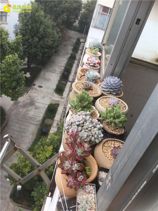 阳台上的多肉-3