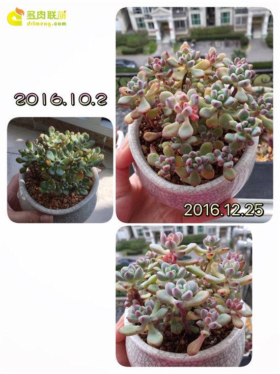 新手多肉植物半年的变化