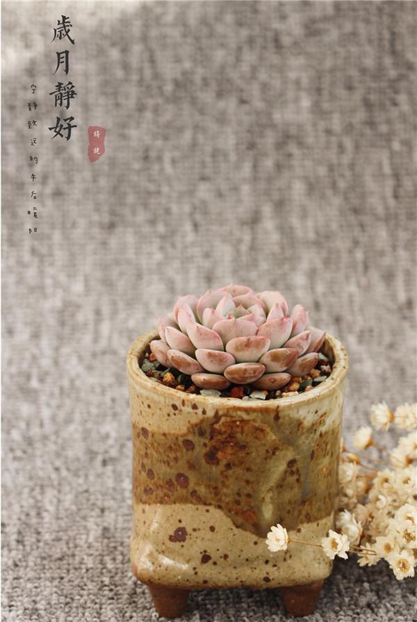 四川乐山露养的天台美肉