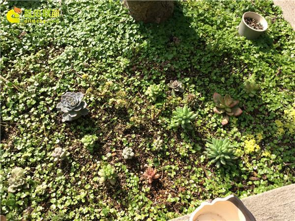泉州养护的多肉植物