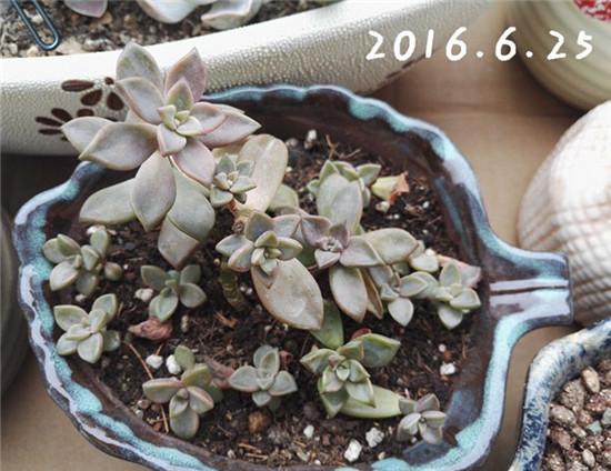 姬胧月成长记录