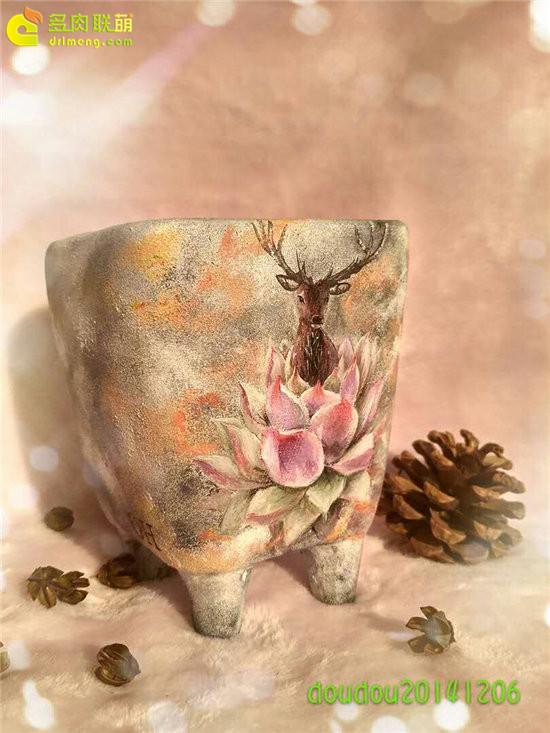 多肉植物手绘花盆
