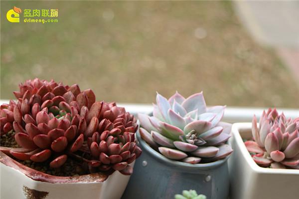 温柔的多肉植物