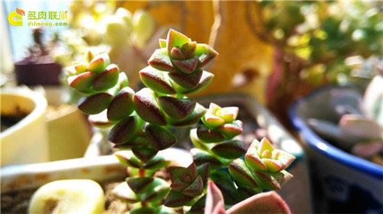 春天里的多肉植物