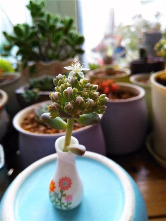 春天多肉植物开的花