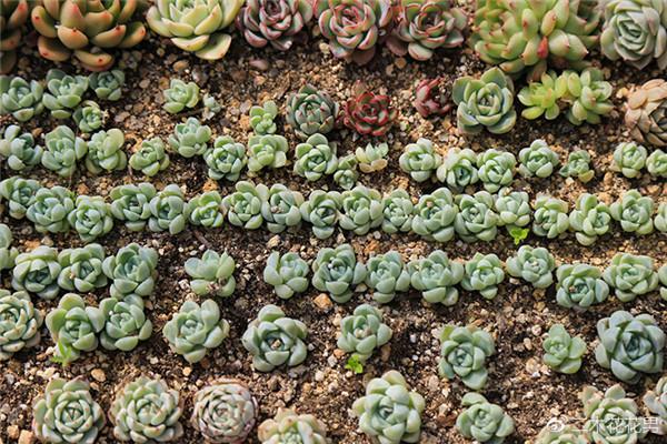 幼苗多肉植物如何浇水