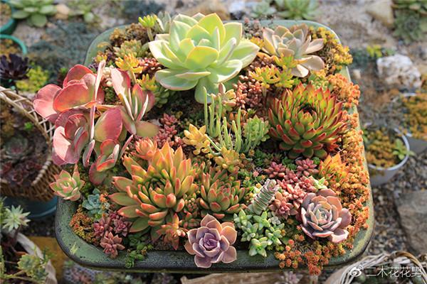 组合盆栽可以多浇水