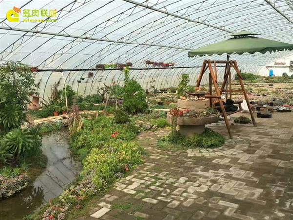 山东莒县多肉植物园