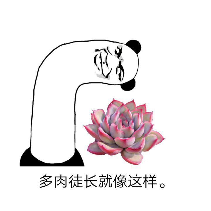 多肉植物表情包