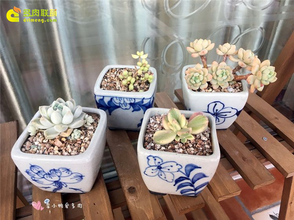 素雅的蓝色小花盆