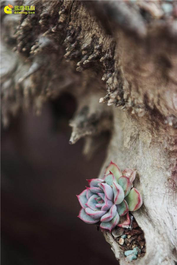 春天,诗和多肉更配哦