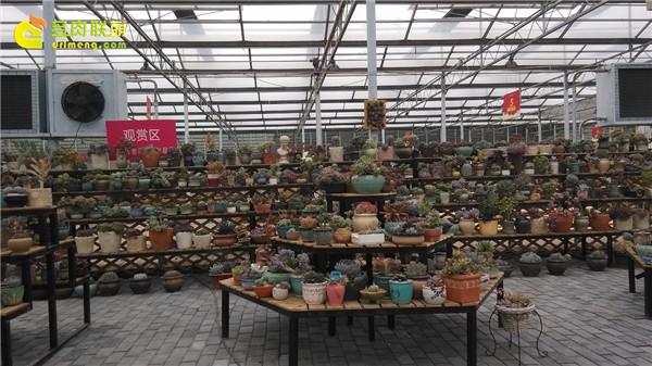 徐州淘宝大棚-绿野园艺