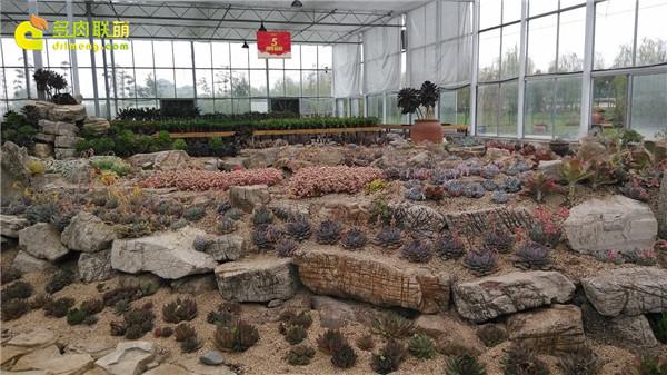 徐州淘宝大棚-绿叶园艺