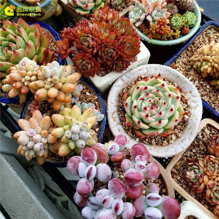 好看的的多肉植物照片